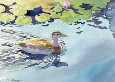 Duck, watercolor by J Messer.